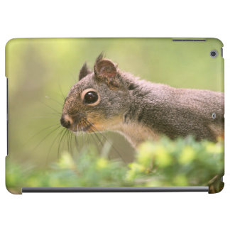 Squirrel in a Tree iPad Air Case