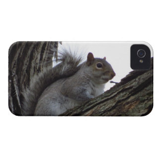 Squirrel in a Tree iPhone 4 Case