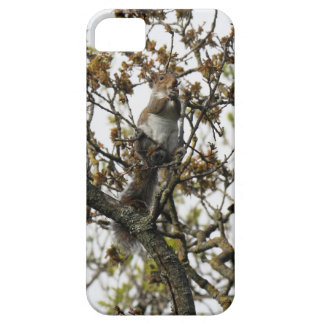 Squirrel in a Tree iPhone SE/5/5s Case