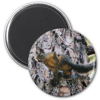 Squirrel In A Tree Magnet
