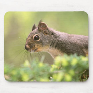 Squirrel in a Tree Mouse Pad