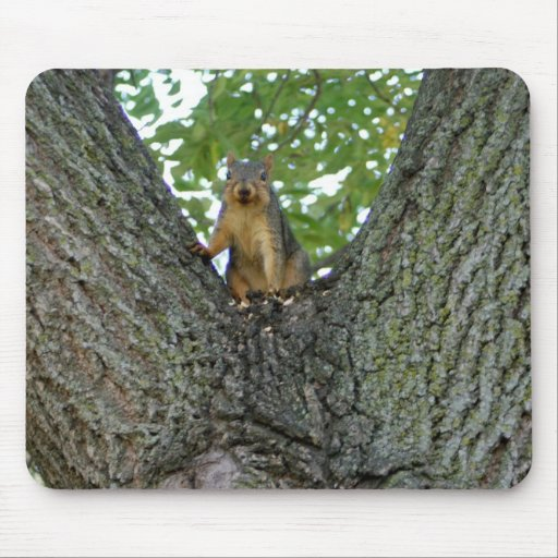 Squirrel in a tree mousepad unique gift ideas