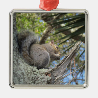 Squirrel in a Tree Christmas Ornament