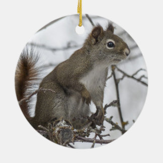 Squirrel in a tree christmas tree ornament