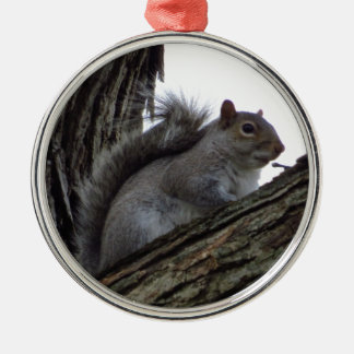 Squirrel in a Tree Ornaments