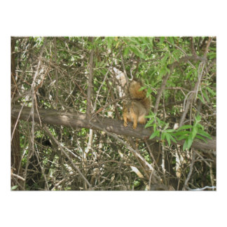 Squirrel In A Tree Photo Print