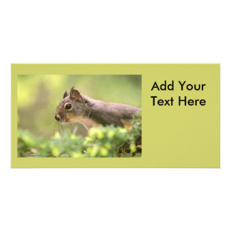 Squirrel in a Tree Personalized Photo Card