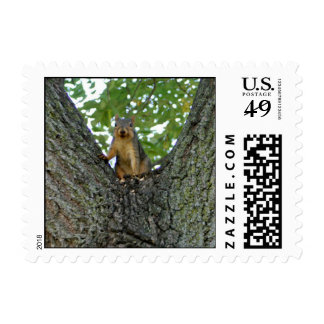 Squirrel in a tree postage stamps