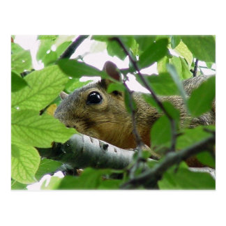 Squirrel in a Tree Postcard