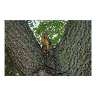Squirrel in a tree poster