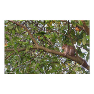 Squirrel in a Tree Print