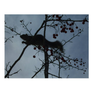 Squirrel in a Tree - products magnets tshirts Postcard