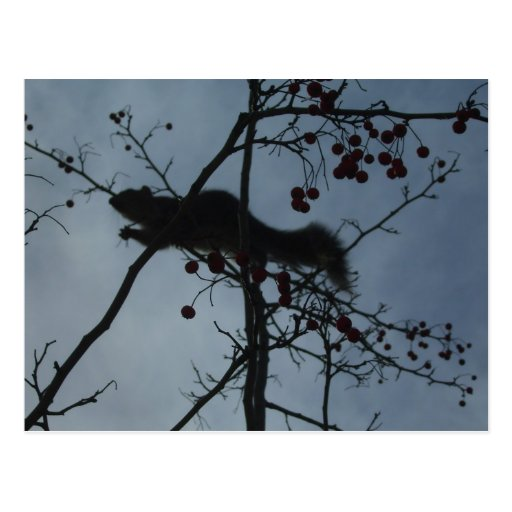 Squirrel in a Tree - products magnets tshirts Post Card