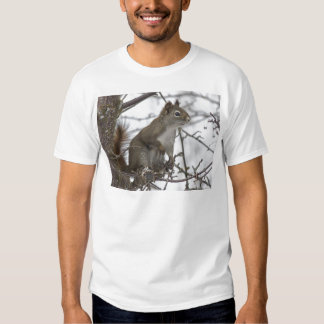 Squirrel in a tree shirt