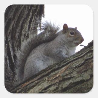 Squirrel in a Tree Square Sticker