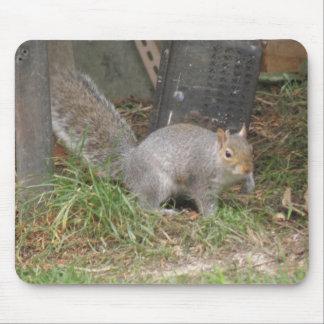 Squirrel in an Urban Garden Mousepad