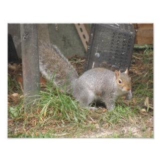 Squirrel in an Urban Garden Photo Print