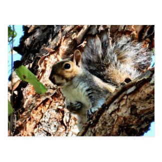 Squirrel in aTree Photo Postcard