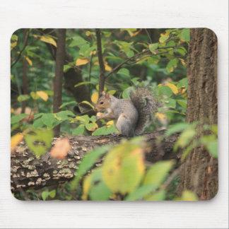 Squirrel in Autumn Mousepad