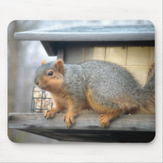 Squirrel in Bird Feeder Mouse Pad