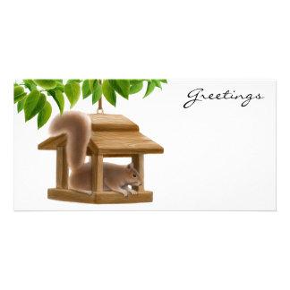 Squirrel in Bird Feeder Photo Card