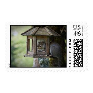 Squirrel In Birdfeeder Postage