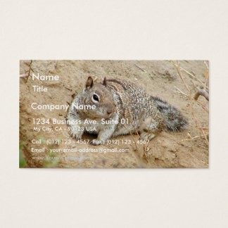 Squirrel In Dirt Sand Business Card