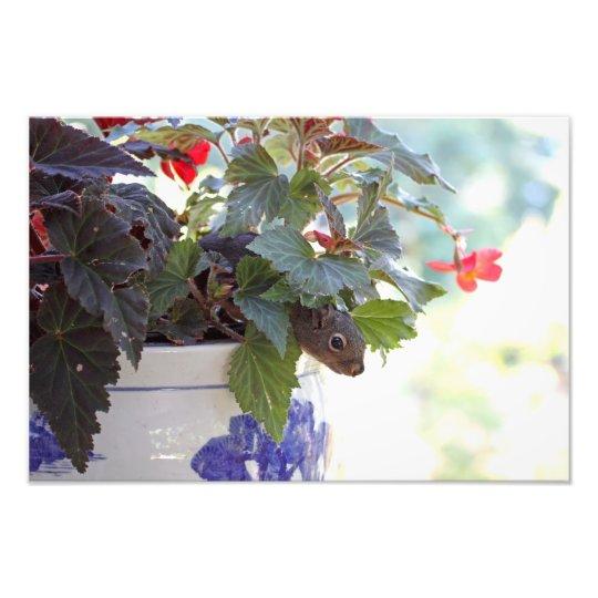 Squirrel in Flower Pot Photo Print