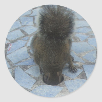 Squirrel in Key Largo, Florida Classic Round Sticker