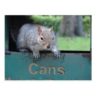 Squirrel in litter bin postcard