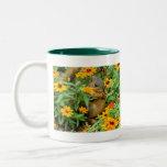 Squirrel In Marigolds (3774) Coffee Mugs
