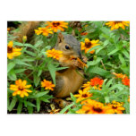 Squirrel In Marigolds (3774) Post Card