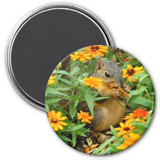 Squirrel In Marigolds (3774) Refrigerator Magnet