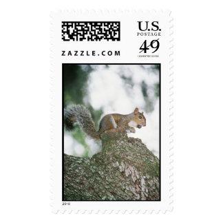 Squirrel in Park Postage Stamp