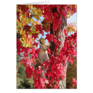 Squirrel in red autumn tree greeting cards