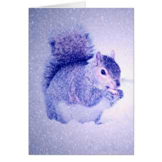 Squirrel in snow card