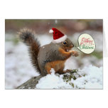 Squirrel in Snow Christmas Greeting Card