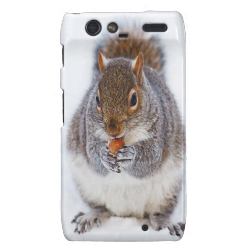 squirrel in snow enjlying sweet and peace motorola droid RAZR case
