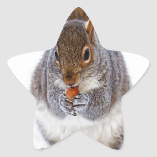 squirrel in snow enjlying sweet and peace star sticker