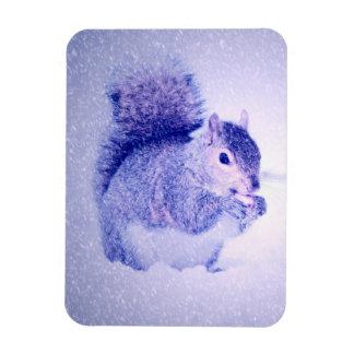 Squirrel in snow magnet