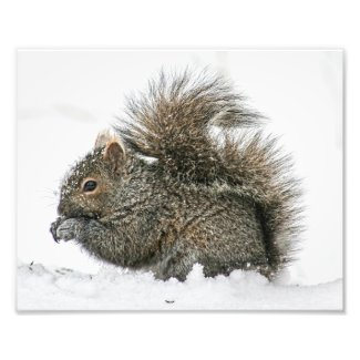 Squirrel in Snow Photography Print
