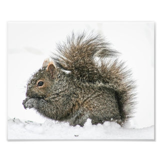 Squirrel in Snow Photography Print Photo Print