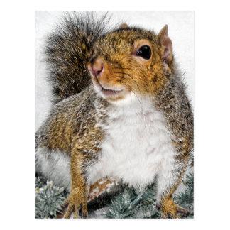 Squirrel In Snow Postcard