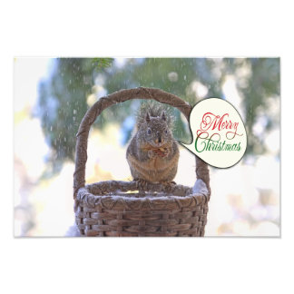 Squirrel in Snow Saying Merry Christmas Photo Print