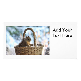 Squirrel in Snowy Basket in Winter Photo Photo Cards