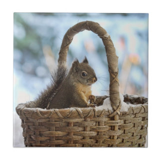 Squirrel in Snowy Basket in Winter Photo Tiles