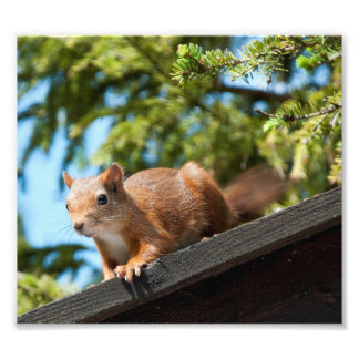 Squirrel In Summertime Photo