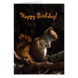 Squirrel in Sunlight Birthday Greeting Card