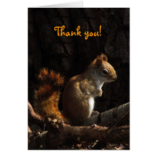 Squirrel in Sunlight Thank You Card