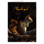 Squirrel in Sunlight Thank You Stationery Note Card